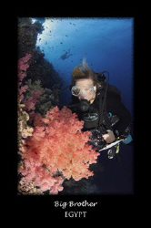 My wife Louise inspecting one of the many soft corals on ... by Stew Smith 